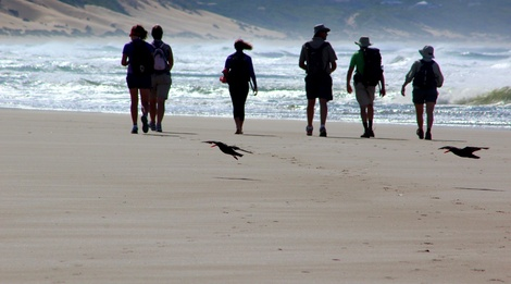 oystercatcher trail,, mossel bay, garden route, south africa, oyster catcher, hiking mossel bay, slackpacking mossel bay, slack-packing mossel bay, staptoere mosselbaai