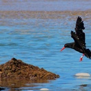 oystercatcher trail, mossel bay, garden route, south africa, oyster catcher, hiking mossel bay, slackpacking mossel bay, slack-packing mossel bay, staptoere mosselbaai