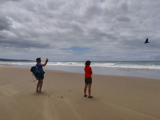 Hikers encountering the Black Oystercatchers